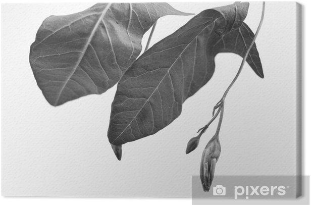 Obraz na płótnie Czarno-biały macrophoto obiektu roślinnego z głębi pola - Zasoby graficzne