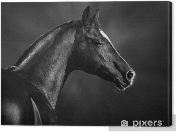 Obraz na płótnie Czarno-biały portret arabskiego ogiera - Tematy