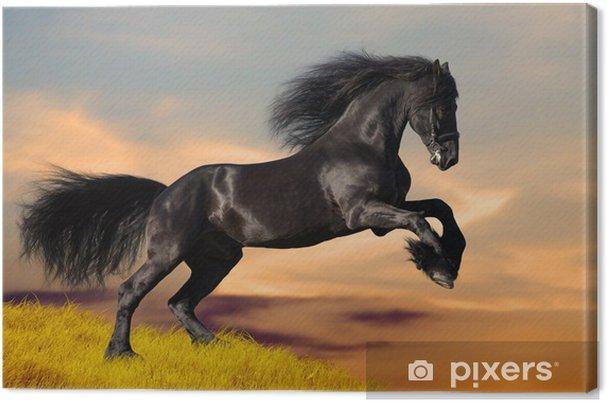 Obraz na płótnie Czarny koń galopujący w zachodzie słońca - Tematy