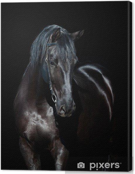Obraz na płótnie Czarny koń wyizolowanych na czarnym tle - iStaging