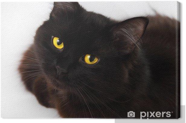 Obraz na płótnie Czarny kot patrzy na ciebie z jasne żółte oczy - Ssaki