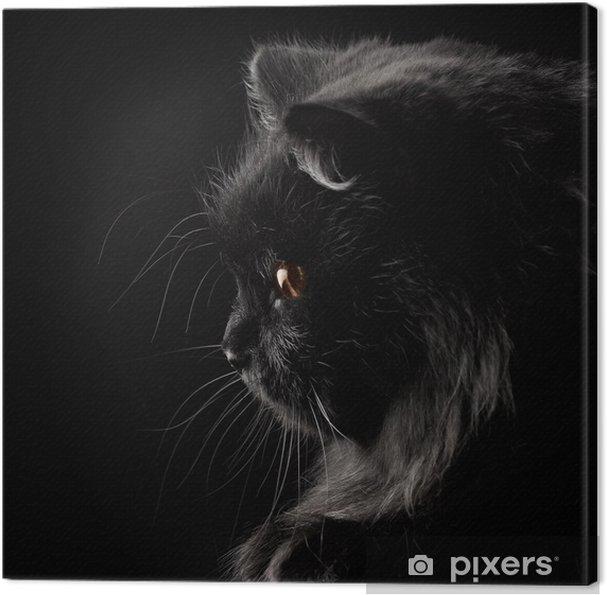 Obraz Na Płótnie Czarny Kot Perski Na Czarnym Tle Pixers żyjemy