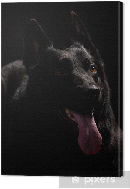 Obraz na płótnie Czarny owczarek niemiecki - Ssaki