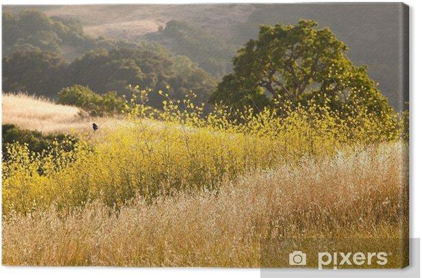 Obraz na płótnie Czarny ptak w polu kwiatów gorczycy w Kalifornii w lecie - Krajobraz wiejski