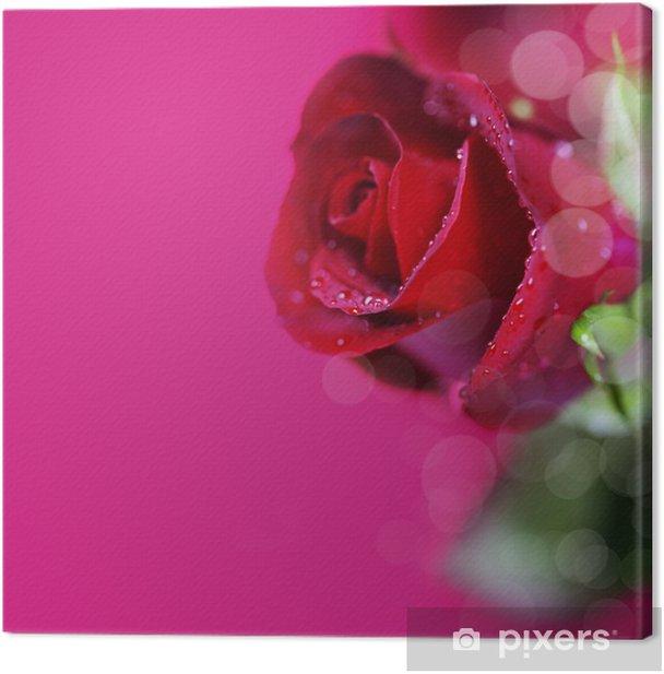 Obraz na płótnie Czerwona róża - Kwiaty