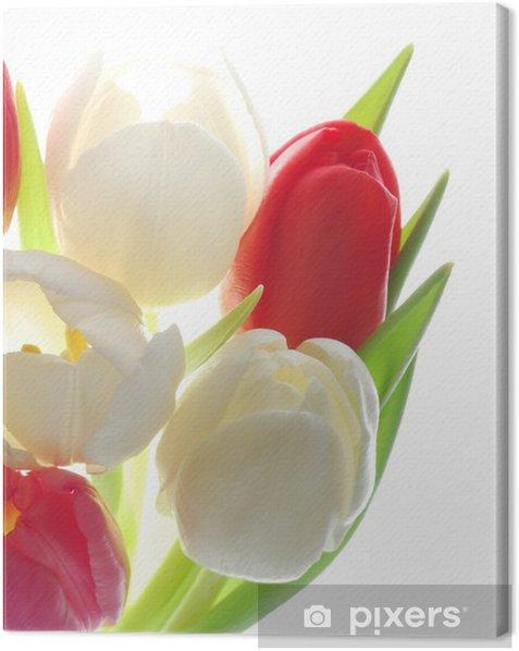 Obraz na płótnie Czerwone i białe tulipany - Pory roku