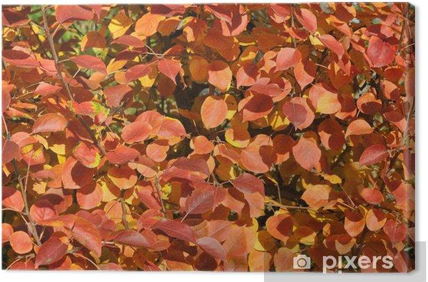 Obraz na płótnie Czerwone jesienią liści dzikiej gruszy - Pory roku