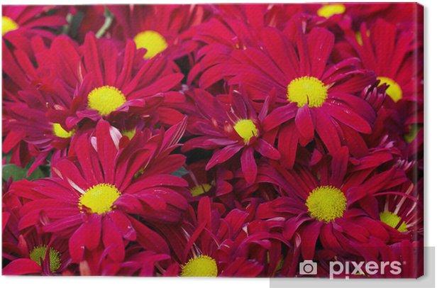 Obraz na płótnie Czerwone kwiaty - Dom i ogród