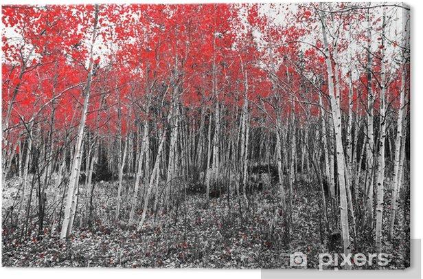 Obraz na płótnie Czerwone liście na upadku drzew w czarno-biały krajobraz leśny - Krajobrazy