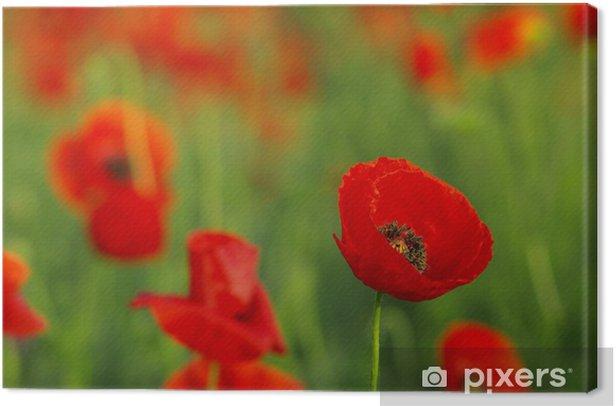 Obraz na płótnie Czerwone maki na łące wiosną - Kwiaty