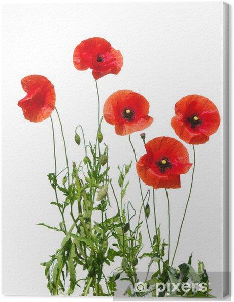 Obraz na płótnie Czerwone maki - Kwiaty