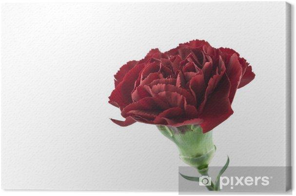 Obraz na płótnie Czerwony goździk - Kwiaty