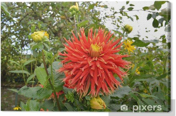 Obraz na płótnie Czerwony kwiat - Kwiaty