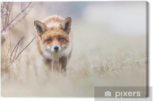 Obraz na płótnie Czerwony lis - Tematy