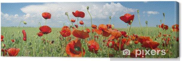 Obraz na płótnie Czerwony mak panorama - Kwiaty