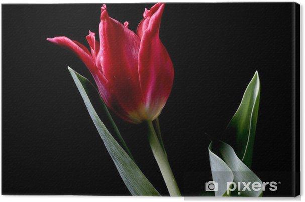 Obraz na płótnie Czerwony Tulipan - Kwiaty