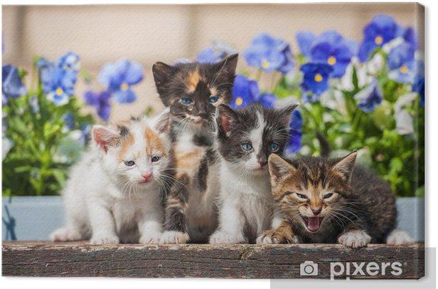 Obraz na płótnie Cztery kocięta siedzi obok kwiatów - Tematy