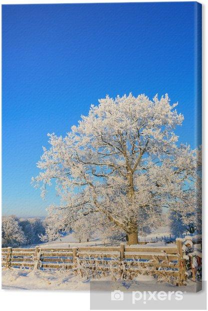 Obraz na płótnie Dąb w zimie - Pory roku