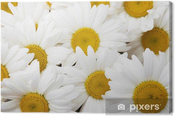 Obraz na płótnie Daisy Tło - Pory roku