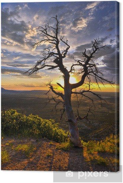 Obraz na płótnie Dead Tree at Sunset - Niebo
