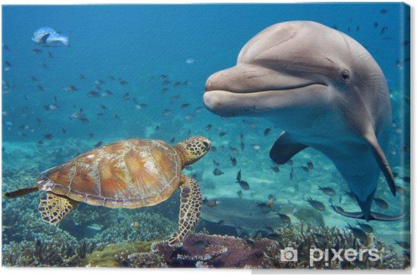 Obraz na płótnie Delfin i żółw na podwodne rafy - Tematy