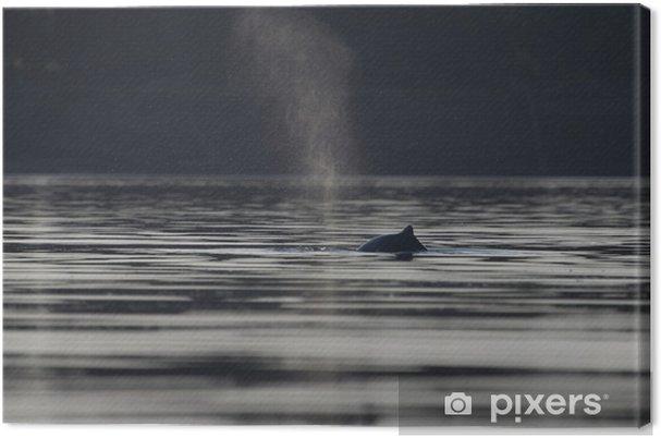 Obraz na płótnie Delfin słodkowodny - Zwierzęta żyjące pod wodą