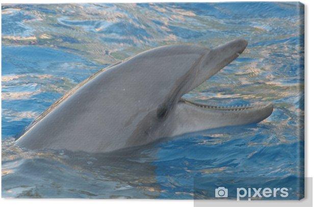 Obraz na płótnie Delfin - Tematy