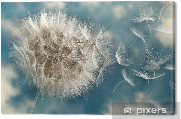Obraz na płótnie Dmuchawiec utraty nasion na wietrze - Tematy