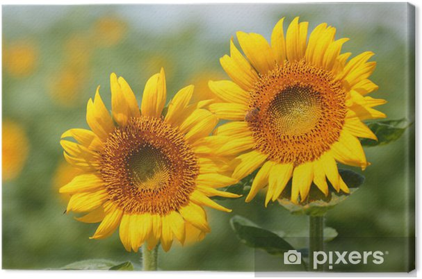 Obraz na płótnie Dobry przyjaciel - Kwiaty