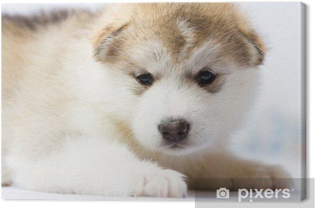 Obraz na płótnie Dog moon, psich zaprzęgów Alaska - Psy