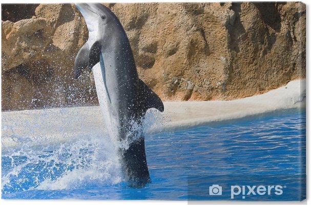 Obraz na płótnie Dolphin taniec w wodzie, w Loro Park, Teneryfa, Wyspy Kanaryjskie - Tematy