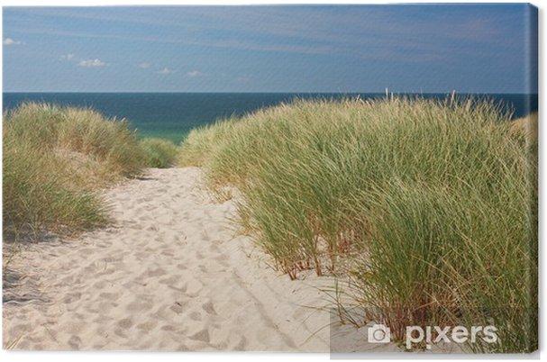 Obraz na płótnie Droga do plaży przez wydmy w Kampen na wyspie Sylt na Morzu Północnym - Niemcy