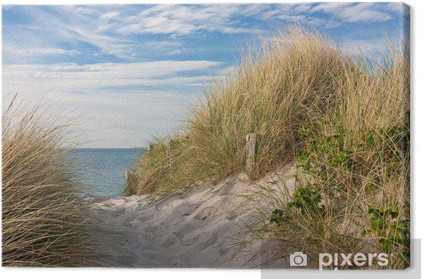 Obraz na płótnie Droga do plaży przez wydmy z trawą plaży nad Bałtykiem - iStaging