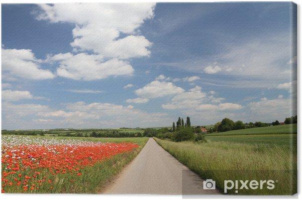 Obraz na płótnie Droga w kolorowe pola uprawne na wiosnę, Austria - Pory roku