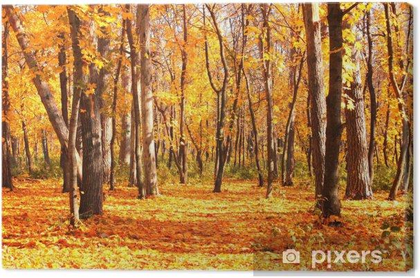 Obraz na płótnie Droga w lesie jesienią - Lasy
