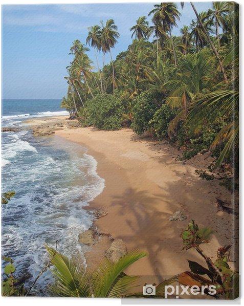 Obraz na płótnie Drzew kokosowych odcienie na dziewiczej plaży - Tematy