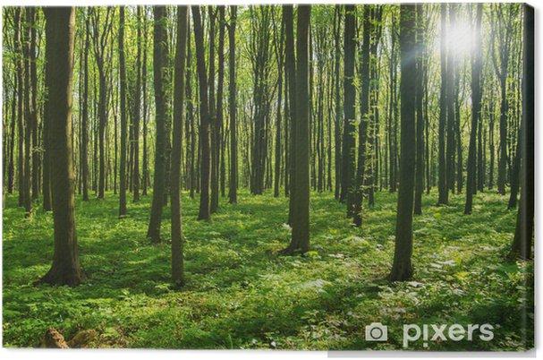 Obraz na płótnie Drzew leśnych. zieleni drewno światło słoneczne tła. - Przeznaczenia