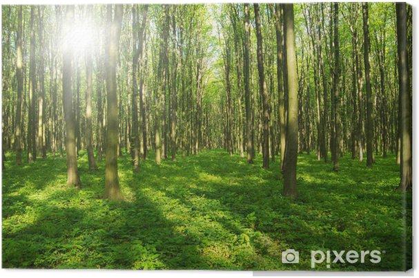 Obraz na płótnie Drzew leśnych. zieleni drewno światło słoneczne tła. - Pory roku