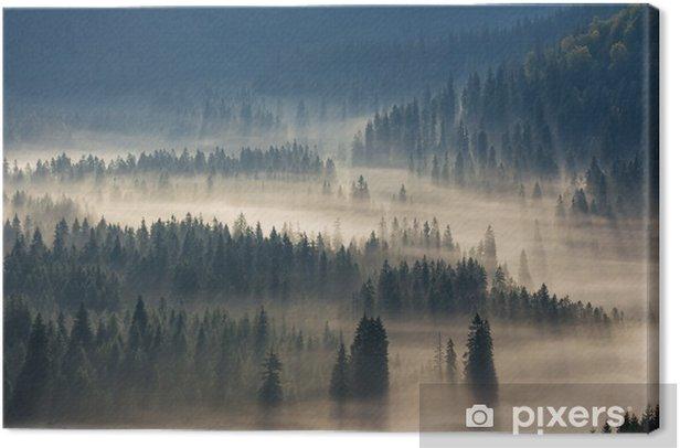Obraz na płótnie Drzew na łąki w dół woli lasu iglastego w mglisty górach - Jesien