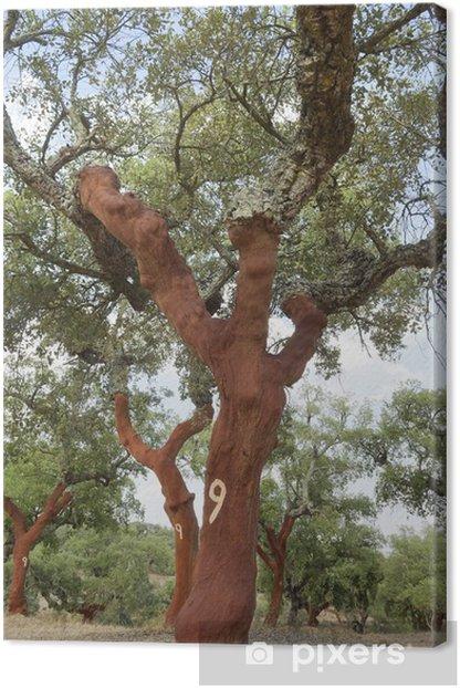 Obraz na płótnie Drzewa Cork - Rolnictwo