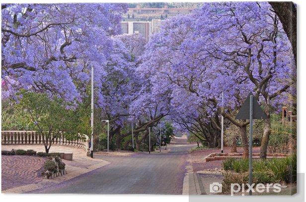 Obraz na płótnie Drzewa Jacaranda - Afryka