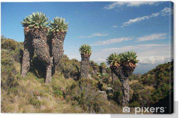 Obraz na płótnie Drzewa Kilimandżaro - Afryka