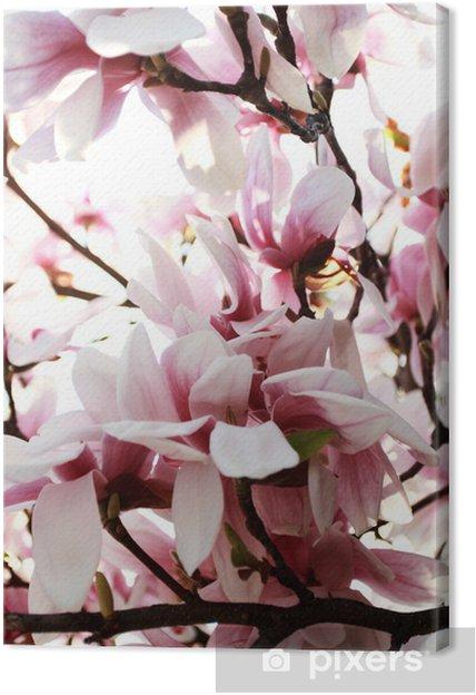 Obraz na płótnie Drzewa magnolii - Tematy