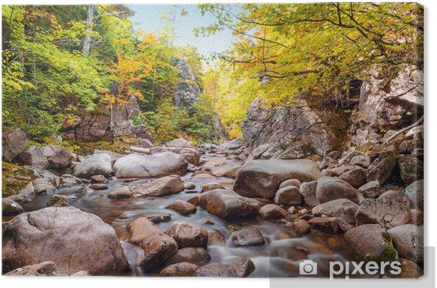 Obraz na płótnie Drzewa rosnące na skałach nad strumieniem - Woda