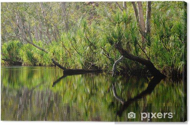 Obraz na płótnie Drzewa z odbicia, Nitmiluk National Park, Australia - Drzewa