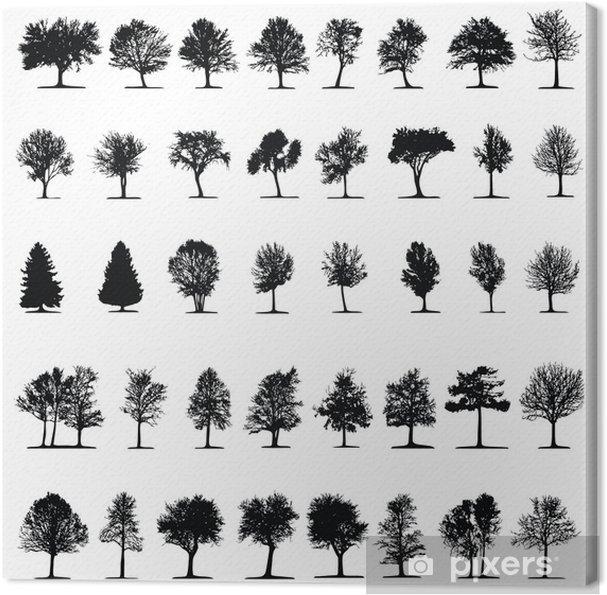 Obraz na płótnie Drzewo drzew ~ ~ ~ iglaste drzewo liściaste - Megaset - Drzewa