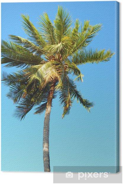 Obraz na płótnie Drzewo kokosowe - Drzewa