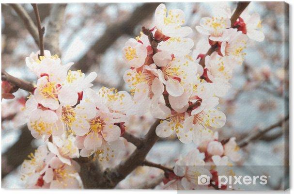 Obraz na płótnie Drzewo migdałowe różowe kwiaty. - Kwiaty
