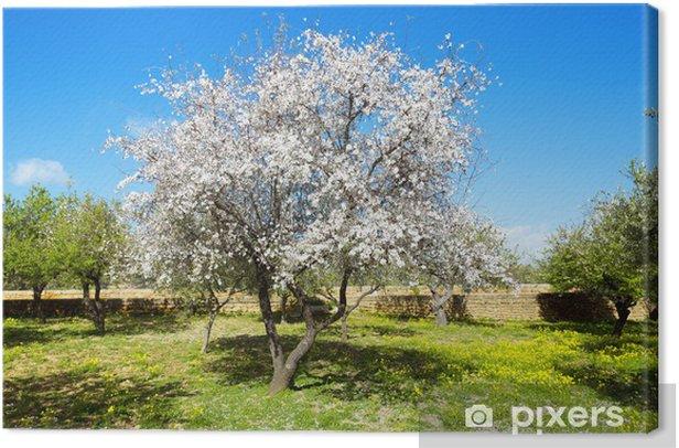 Obraz na płótnie Drzewo migdałowe - Drzewa