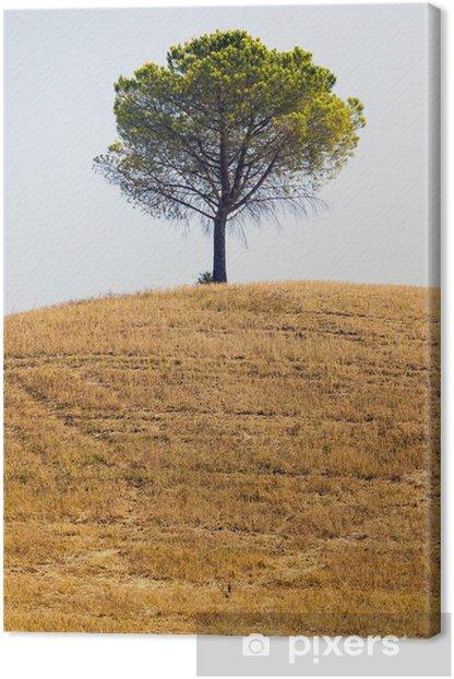 Obraz na płótnie Drzewo na wsi w Apulii - Rolnictwo